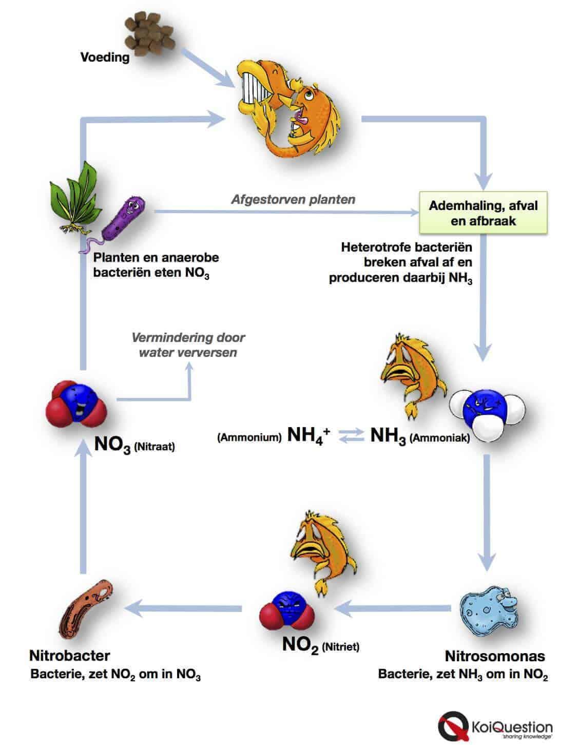 Anaerobe bacterien voorbeelden