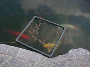Voederen van vissen voor beginners