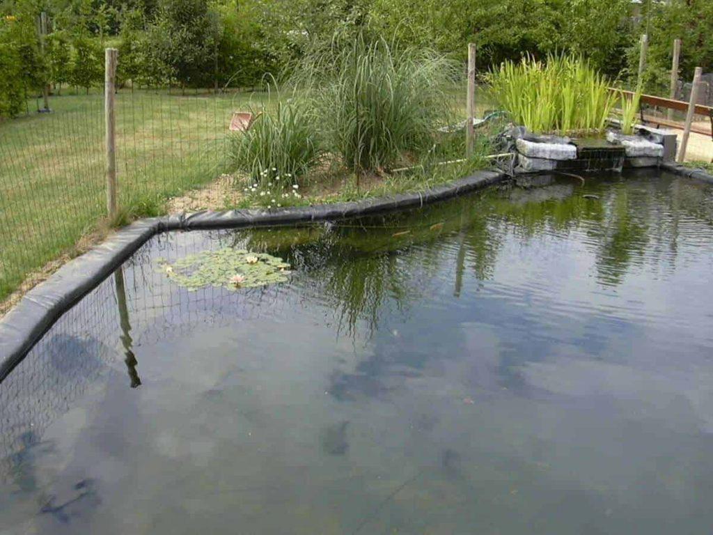 moerasfilter-zwemvijver