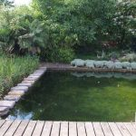 Zwemvijvers filteren we met een moeraszone