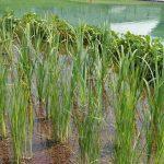 Energiezuinige zwemvijver met biologische filtering