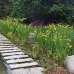 De beste planten voor plantenfilters