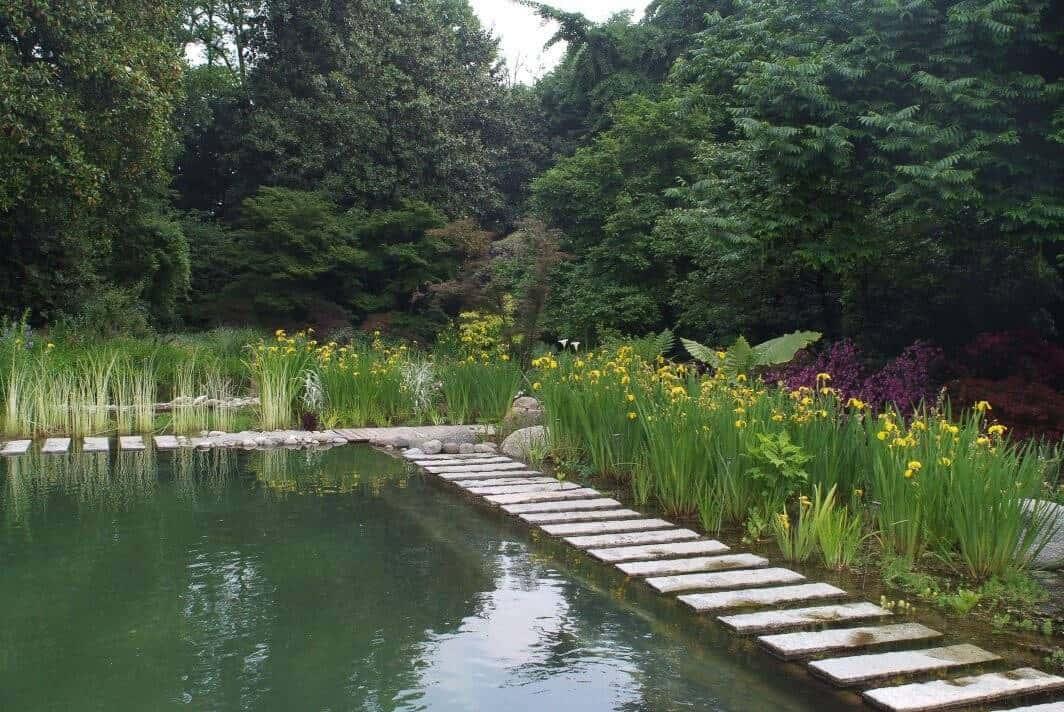 Zwemvijver met zwemgedeelte omringd door een plantenfilter met gele lis