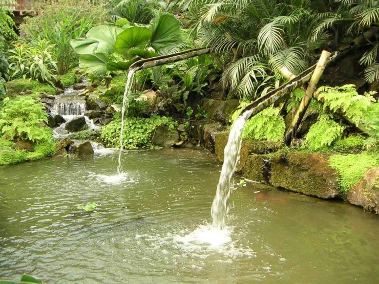 tropische-vijver